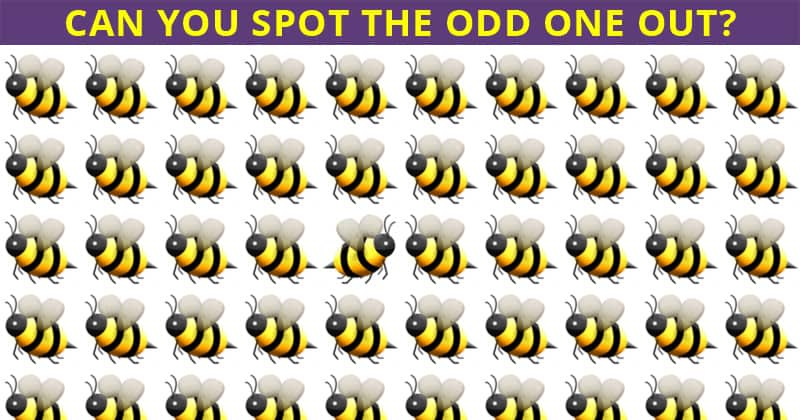 Almost No One Can Beat This Odd One Out Test. Prove Us Wrong!