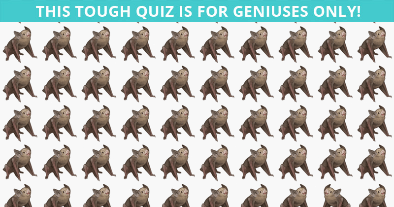 No One Can Score A Perfect Score On This Odd One Out Visual Challenge Without Cheating. Prove Us Wrong?