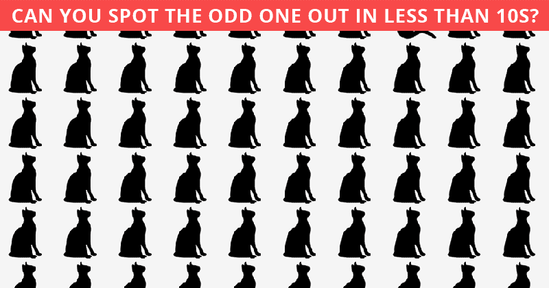 Almost No One Can Achieve 100% In This Tough Odd One Out Test. How About You?
