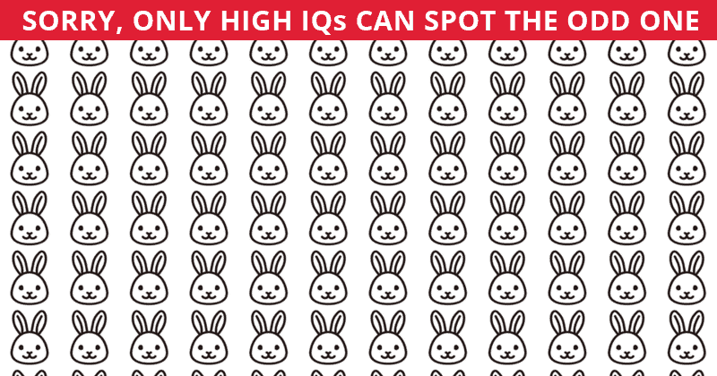 You're A Genius If You Get 100% In This Odd One Out Challenge!