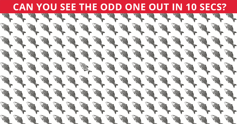 Almost No One Can Beat This Challenging Odd One Out Visual Puzzle. How About You?
