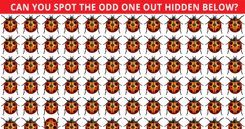 Only Highly Creative People Can Pass This Odd One Out Visual Game