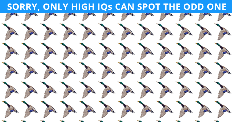 Nobody Can Solve This Crazy Tough Test. Can You Spot The Odd One Out Immediately?
