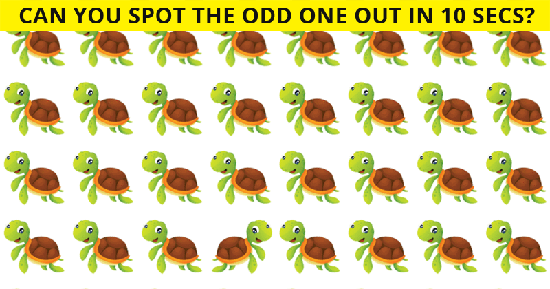 Only Highly Creative People Can Pass This Odd One Out Quiz